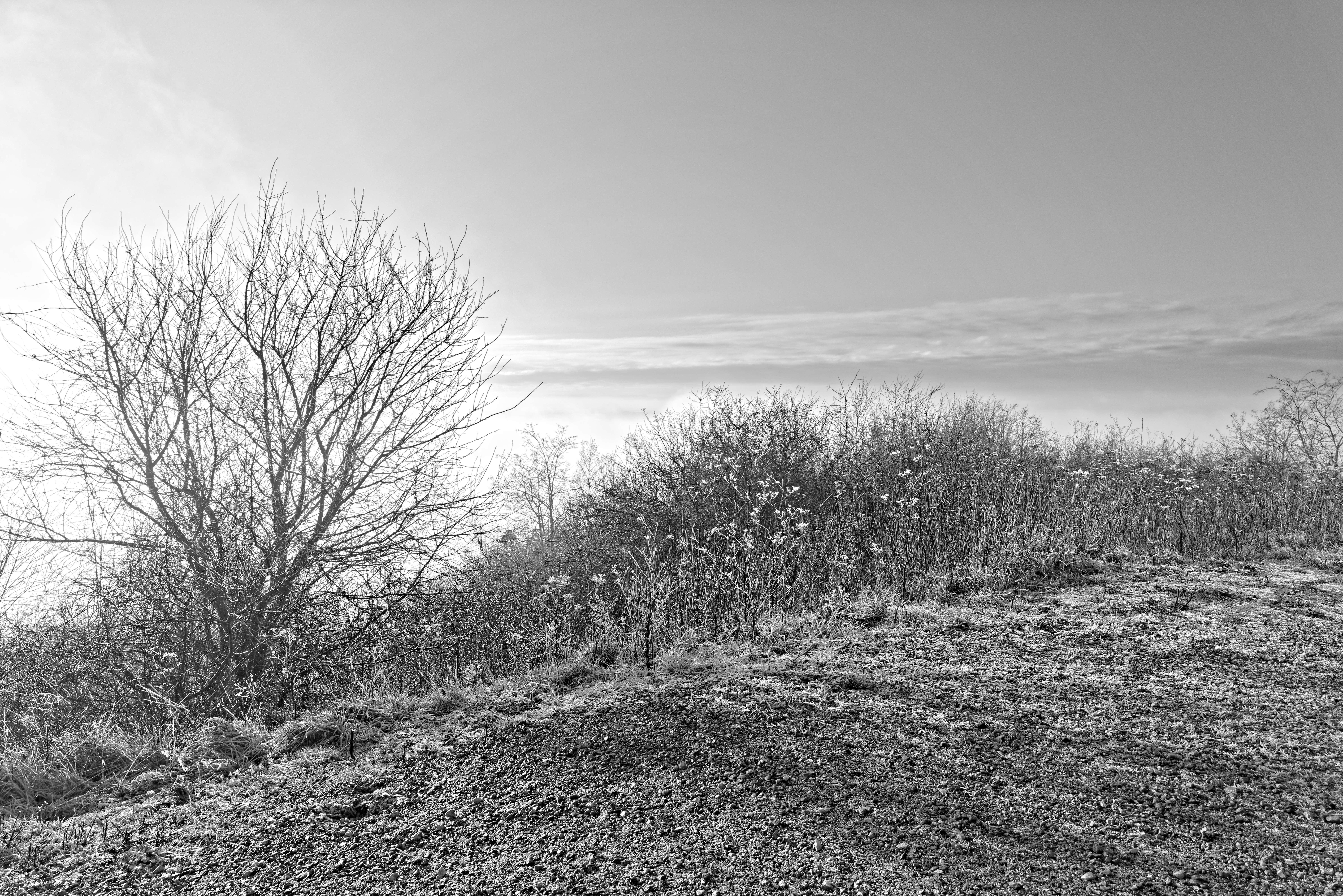 Point sur le dossier JO 2024 pour la partie épreuve VTT sur la colline de La Revanche à Élancourt